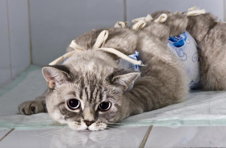 Инструкция как ухаживать за котом