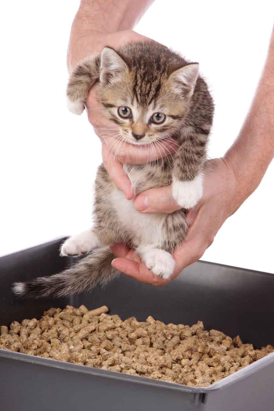 Уход за котенком (1 месяц) без кошки