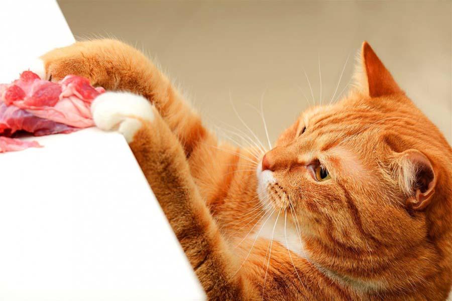 Вегетарианский корм для кошек