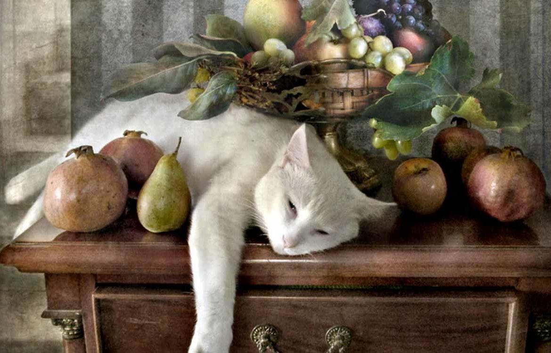 Разруха в головах, или вегетарианский корм для кошек