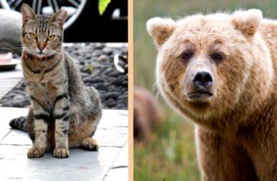 Видео кот прогнал медведя