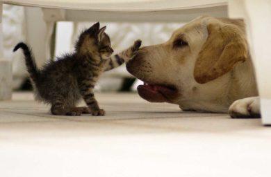 Видео про котят и собак