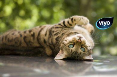 Viyo для кошек