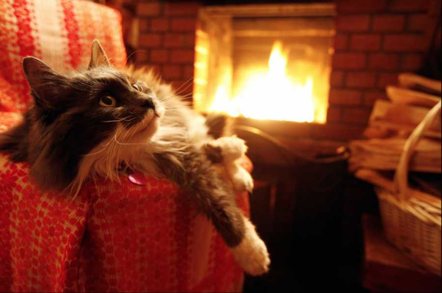 Впадают ли кошки в зимнюю спячку