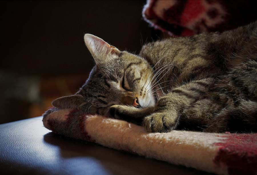Впадают ли в зимнюю спячку кошки
