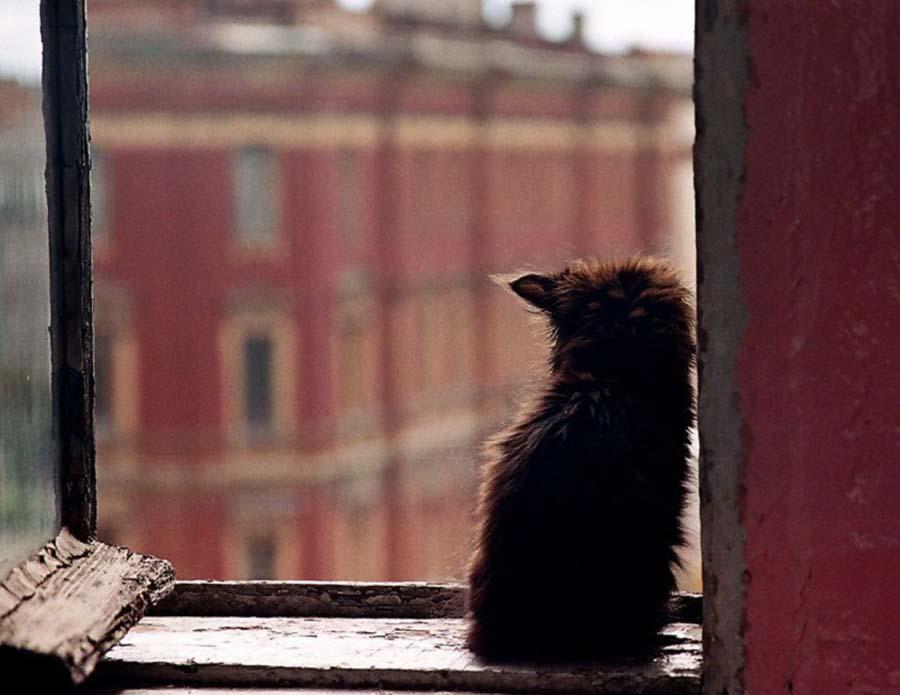 кот со знаком скайрима