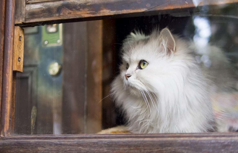 Есть ли у кошек память на людей?