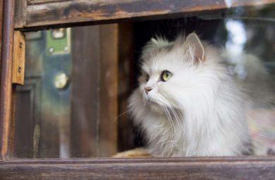 Вспомнит ли кот человека через год
