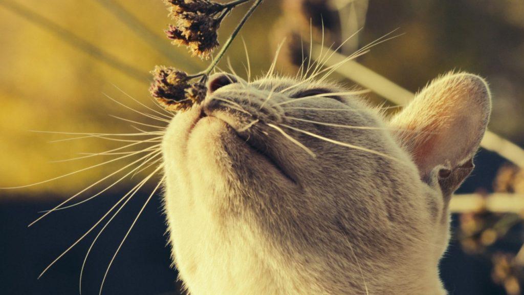 Зачем кошке нужны усы