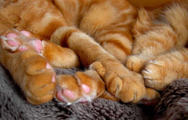 Зачем кошке подушечки на лапах?