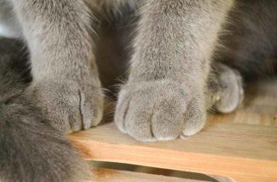 Зачем кошки топчут лапками