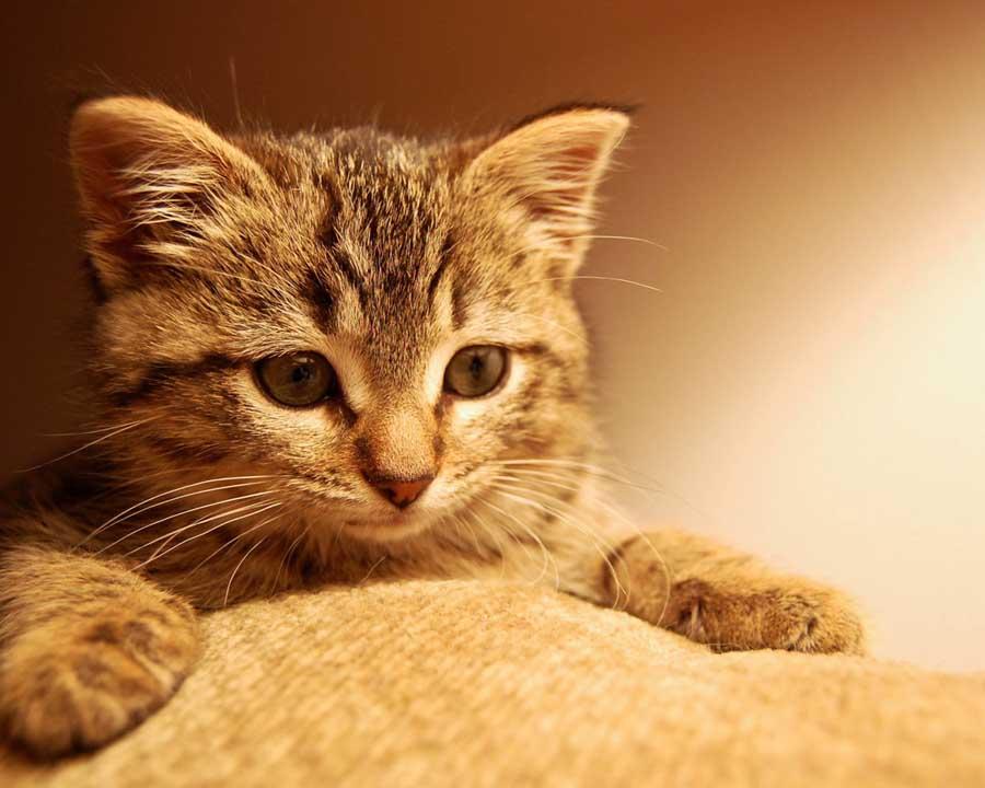 Зачем кошки топчутся
