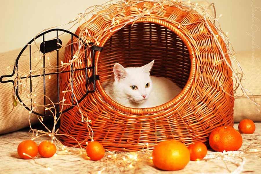 Запах этого фрукта кошки ненавидят