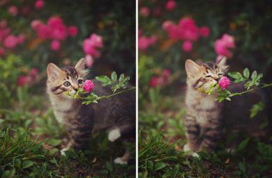 Запах каких растений любят кошки