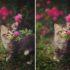 Запах каких растений любят кошки?