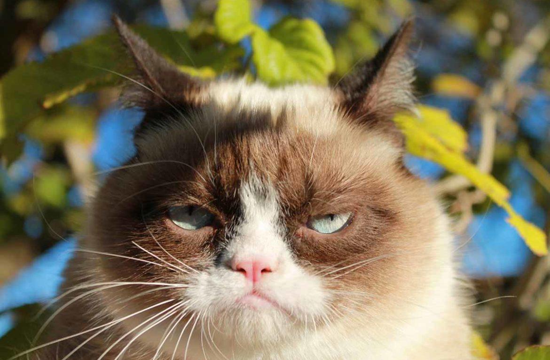 Какой запах отпугивает кошек на даче