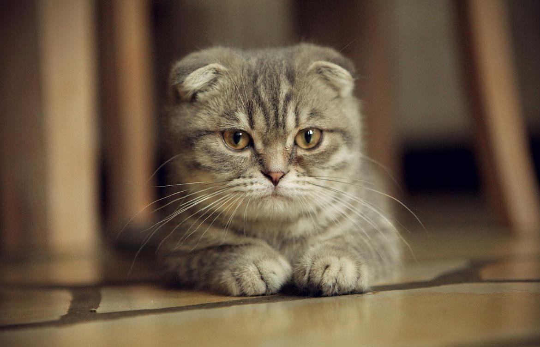 Болезни желудка у кошек: симптомы и лечение