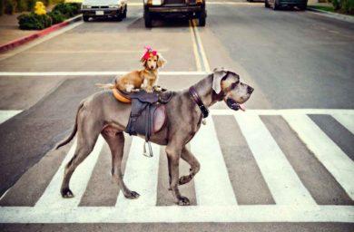 Животные-пешеходы