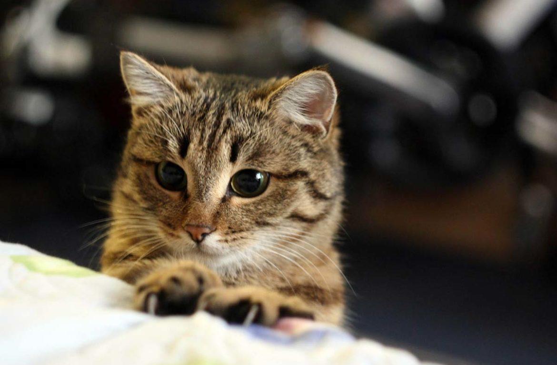 Жизнь с кошкой: семь неудобств, знакомых каждому
