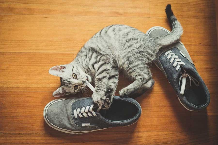 Жизнь с кошкой