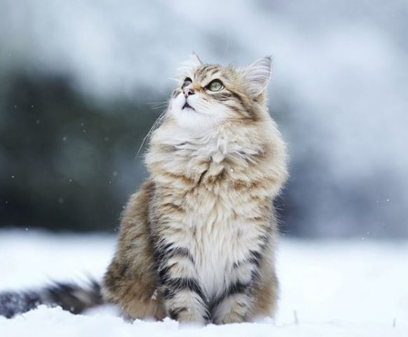 Зима – кошка в снегу