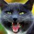 Брачные звуки кошек: гимн вечной жизни и любви