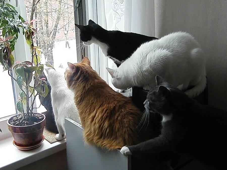 подарить другу картинки про мартовских котов с юмором уже говорилось