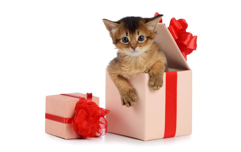 Поздравления подарок котенок
