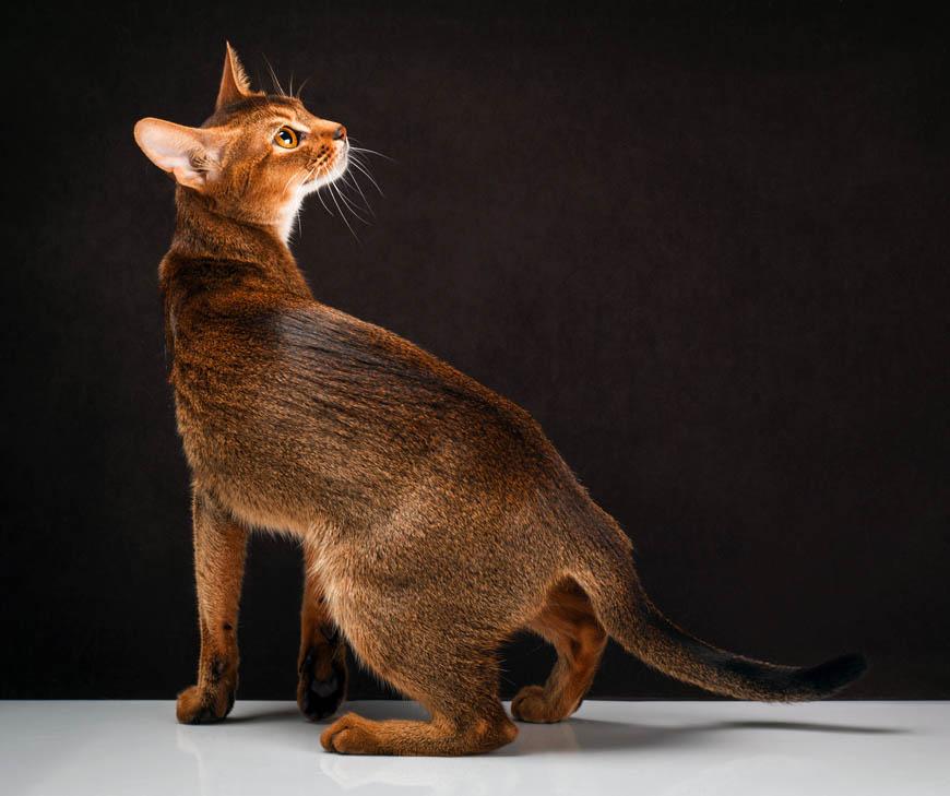 Коты диких окрасов