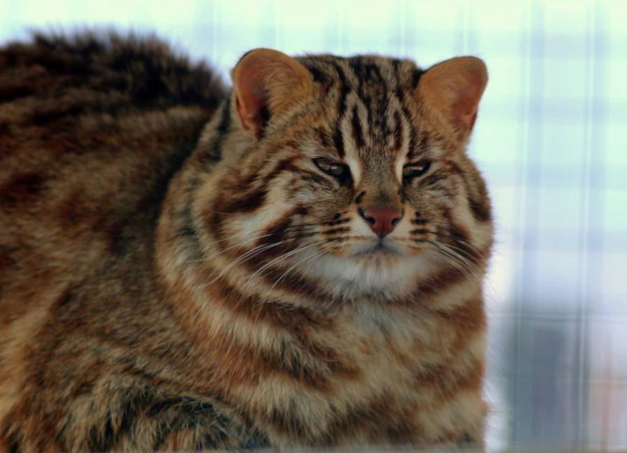 Демодекоз у кошек: лечение 23