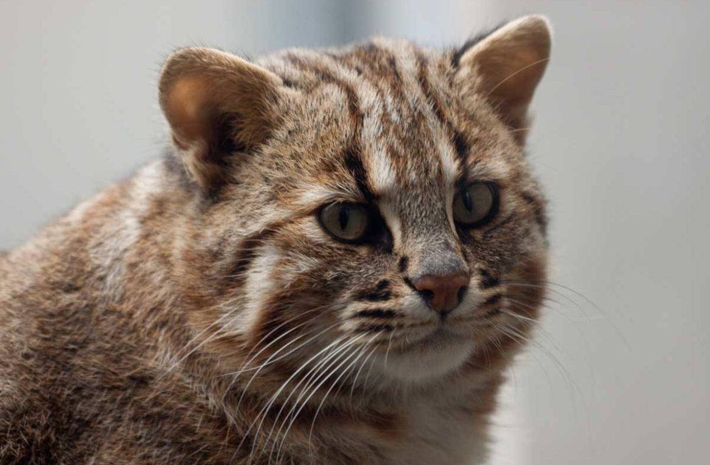 лакомством амурские кошки фото сделали селфи
