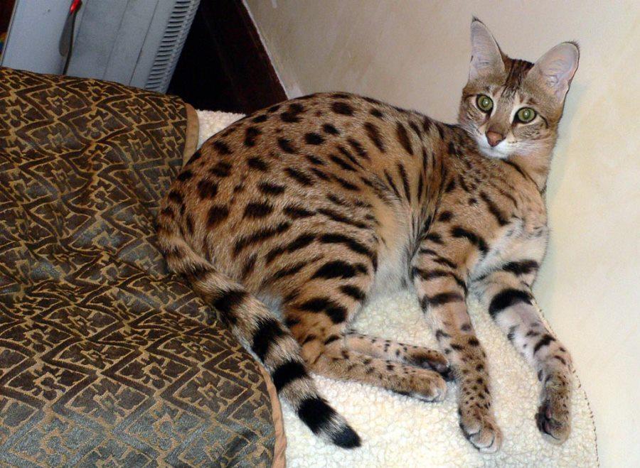 ашер фото кошка