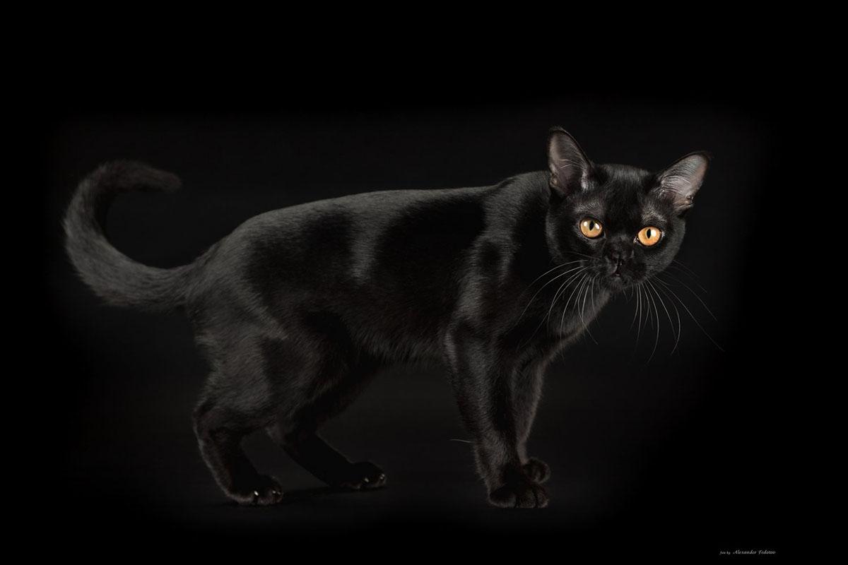 """Результат пошуку зображень за запитом """"у кошек на фотографиях получаются горящие глаза"""""""