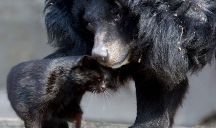 фото медведя и кошки очень много фанатов
