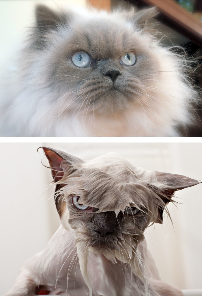 мокрые кошки картинки