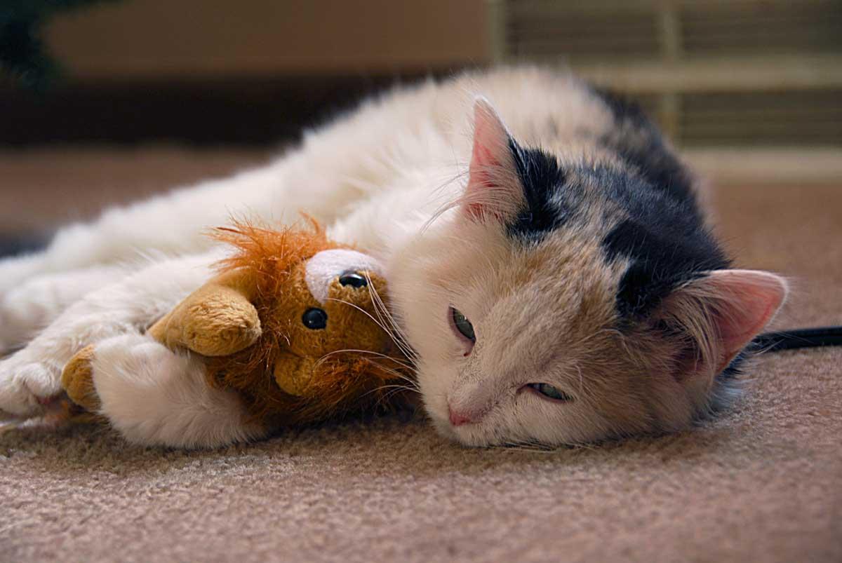 Гной в глазах у кошки