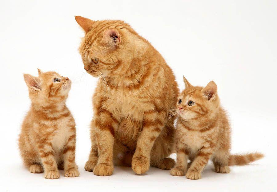Картинки по запросу кот кошка и котята картинки для детей
