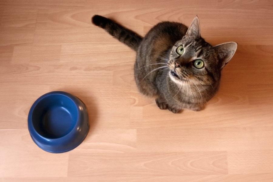 Как лечить кошке язву желудка