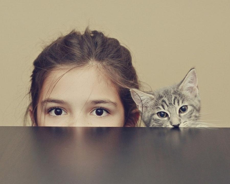 Как можно наказать котенка