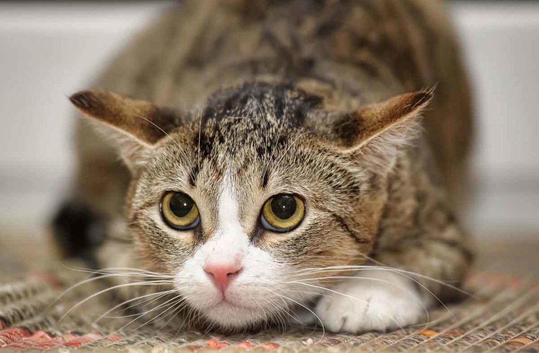 нервная кошка картинка
