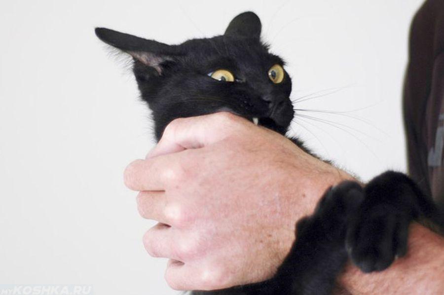 Как наказать кота за агрессию