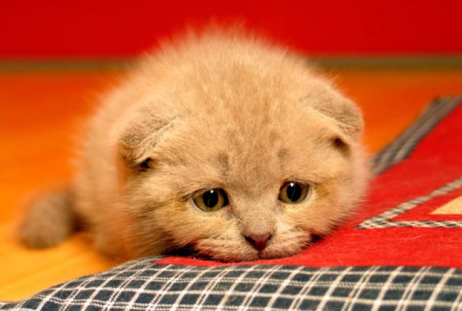 платок картинки грустный котенок можно обжаловать