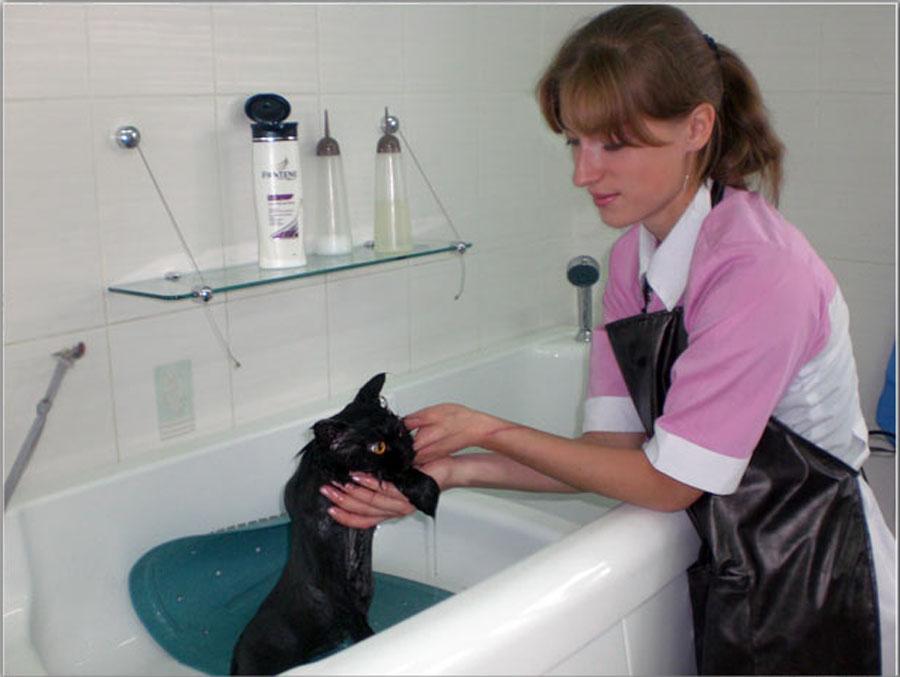 Как правильно искупать кота