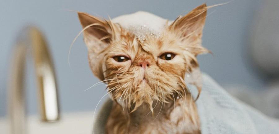 Купать кошку в домашних условиях 172