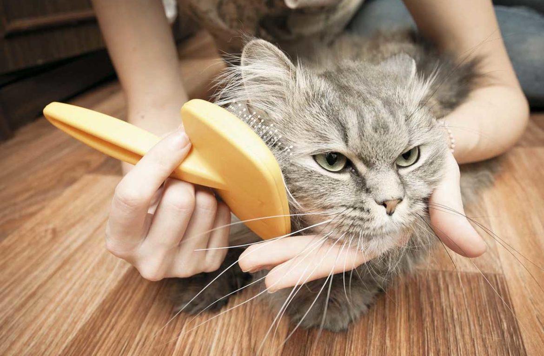 расчесывать кошку картинки дома кирпича