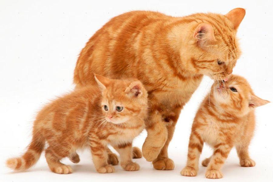 Как сделать кошку ласковой, если она злая?