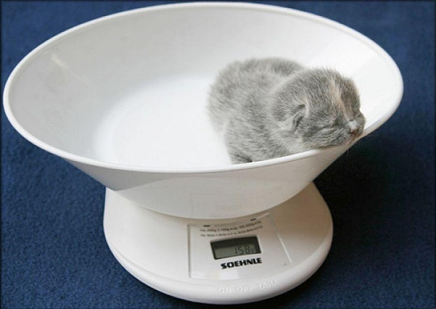 Как у кошки перегорает молоко?