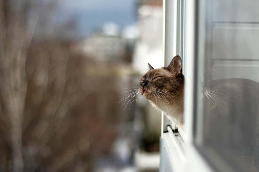 Какой запах нравится кошкам