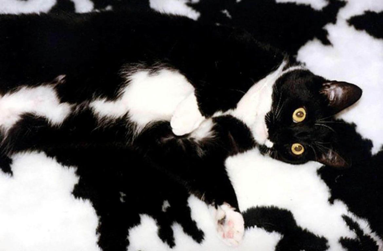 позволит избежать коты маскировщики фото полях