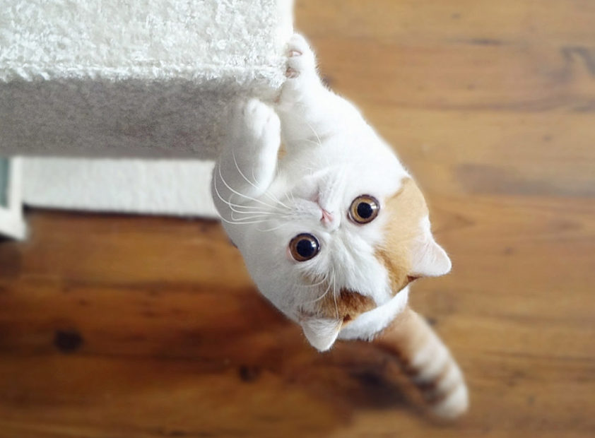 Кошка с большими глазами: фото породы